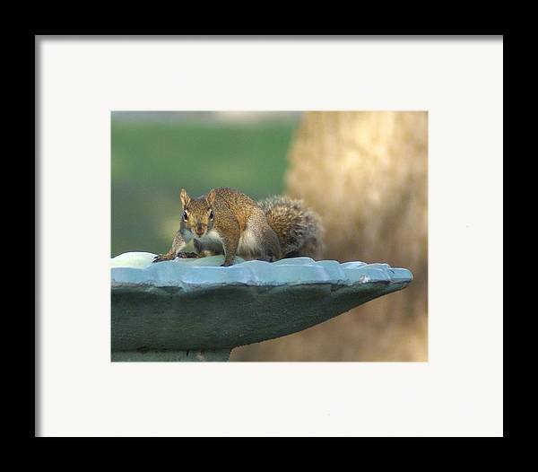 Squirrel Framed Print featuring the painting Testing The Waters by Debbie May