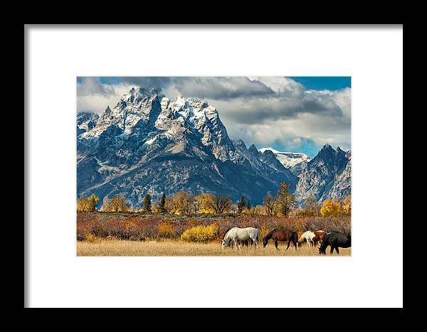 Horse Framed Print featuring the photograph Teton Horses by Kathleen Bishop