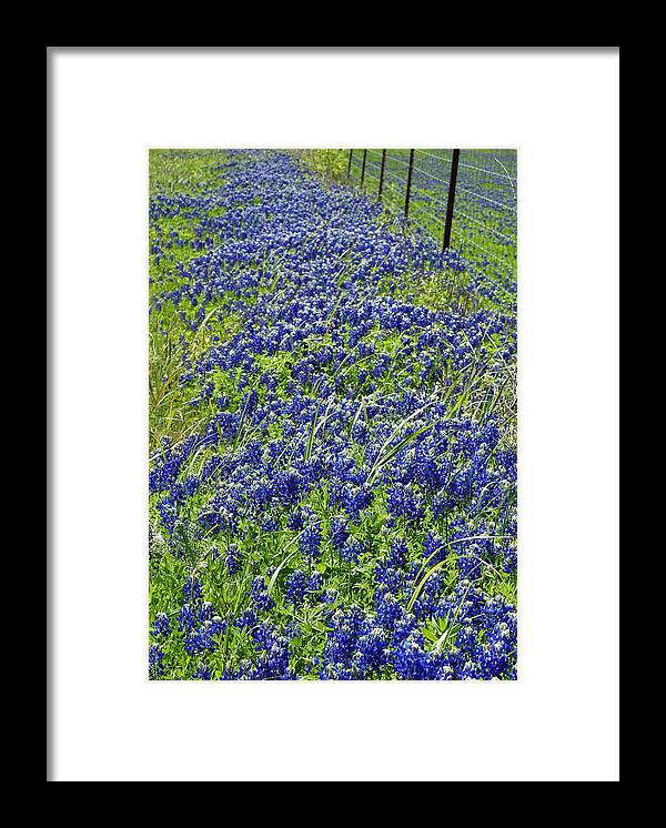 Bluebonnet Framed Print featuring the photograph Texas Bluebonnets 004 by Jenny Harrison