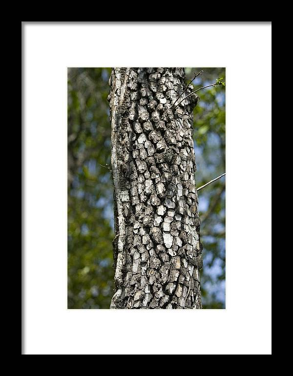 Tree Framed Print featuring the photograph Texture by Magda Levin-Gutierrez