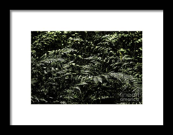 Green Framed Print featuring the photograph Textures Of A Rainforest by Jorgo Photography - Wall Art Gallery