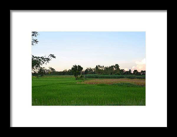 Thailand Framed Print featuring the photograph Thai Fields by Michael Brown