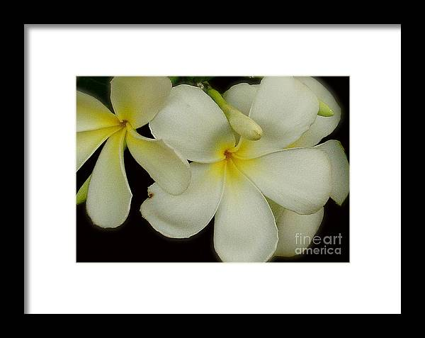 White Framed Print featuring the photograph Thai Flowers IIi by Louise Fahy
