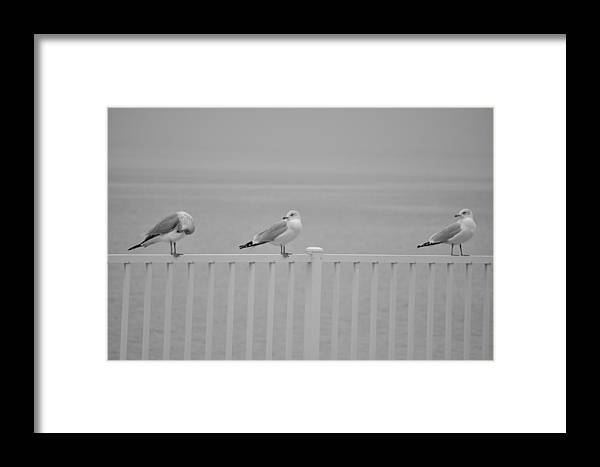 Birds Framed Print featuring the photograph The Accusation by David Halperin