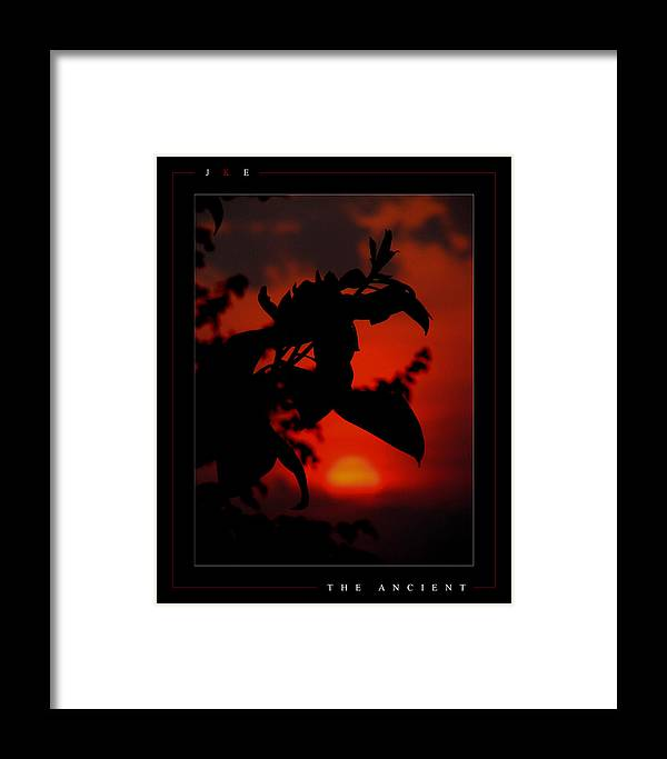 Magnolia Framed Print featuring the photograph The Ancient by Jonathan Ellis Keys