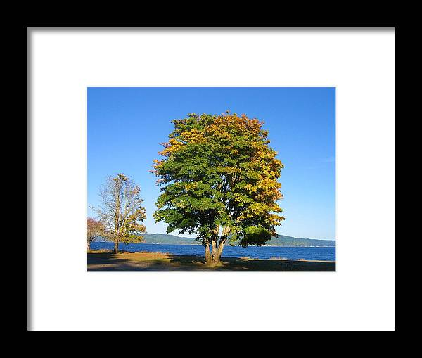 Framed Print featuring the digital art The Autum Leaves by Barb Morton