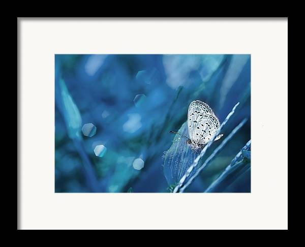 Macro Framed Print featuring the photograph The Baby Dancing by Amri Arfianto