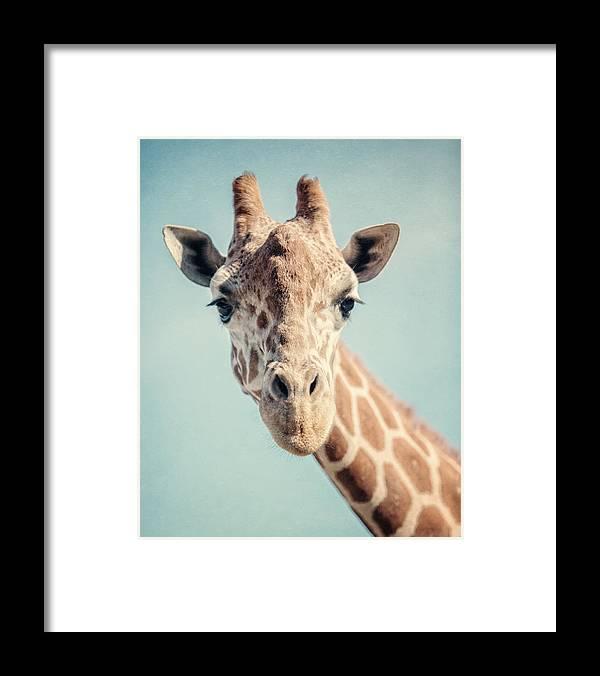 Giraffe Framed Print featuring the photograph The Baby Giraffe by Lisa R