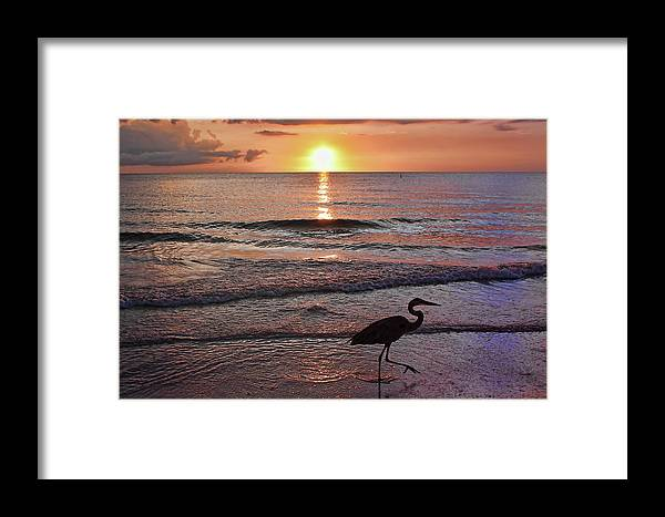 Great Blue Heron Framed Print featuring the photograph The Beachcomber Shuffle by HH Photography of Florida