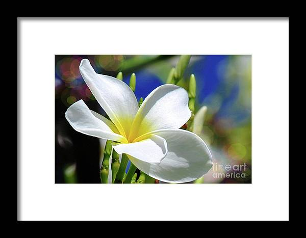 Flower Framed Print featuring the photograph The Beautiful Plumeria by Elaine Manley