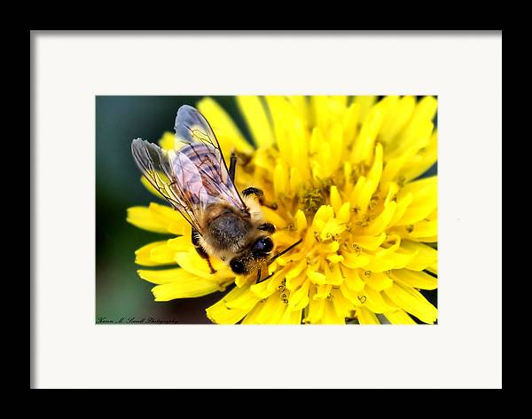 Macro Framed Print featuring the photograph The Bee by Karen Scovill