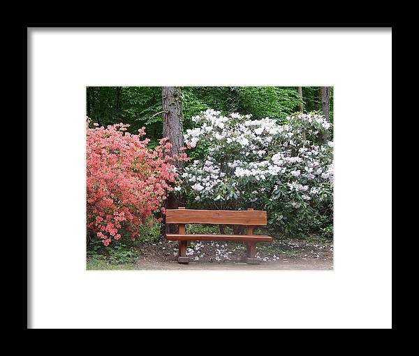 Spring Framed Print featuring the photograph The Bench Of Peace And Pleasure by Attila Balazs