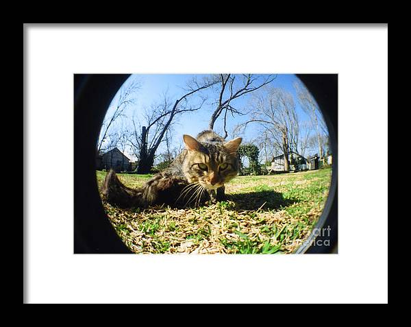Cat Framed Print featuring the photograph The Better To See You With My Dear by DeeDee Yelverton