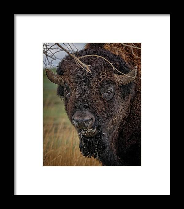 Buffalo Framed Print featuring the photograph The Buffalo 2 by Ernie Echols