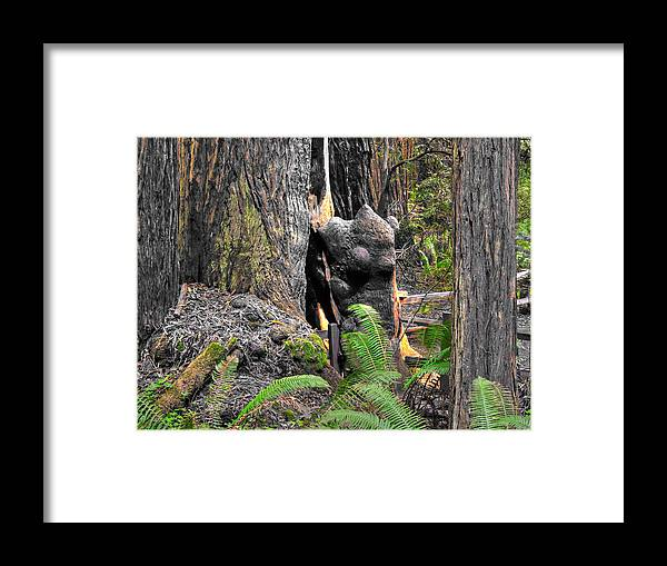 California Framed Print featuring the photograph The Burly Bear Cub Close1 - Muir Woods National Monument - Marin County California by Michael Mazaika