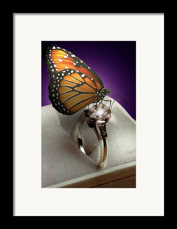 Fantasy Framed Print featuring the photograph The Butterfly And The Engagement Ring by Yuri Lev