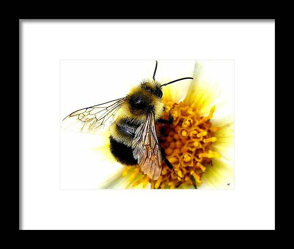 Honeybee Framed Print featuring the photograph The Buzz by Will Borden