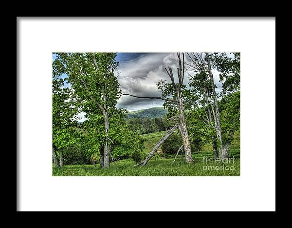Virginia Framed Print featuring the photograph The Buzzard Trees by Pete Hellmann