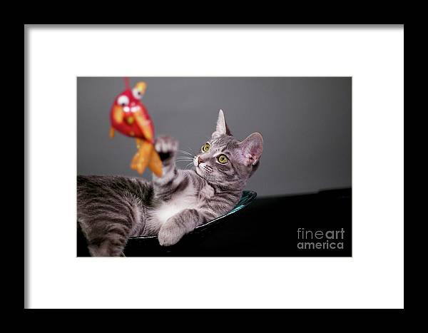 Digital Photography Framed Print featuring the photograph The Cat And The Fish by Afrodita Ellerman