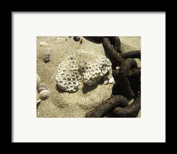 Chain Framed Print featuring the photograph The Chain And The Fossil by Trish Tritz