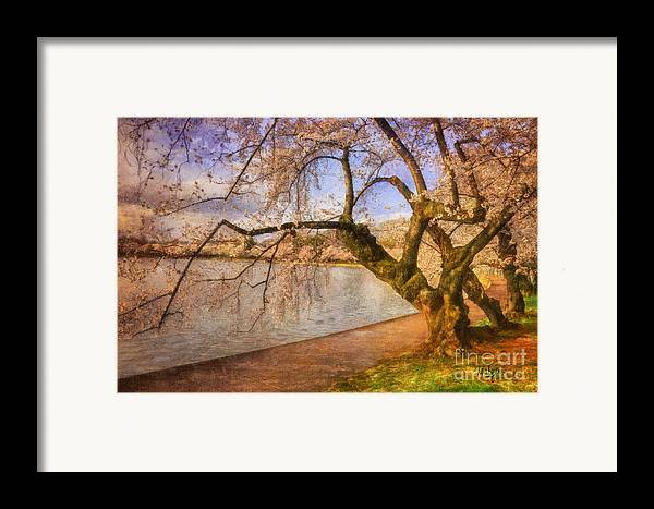 Trees Framed Print featuring the photograph The Cherry Blossom Festival by Lois Bryan