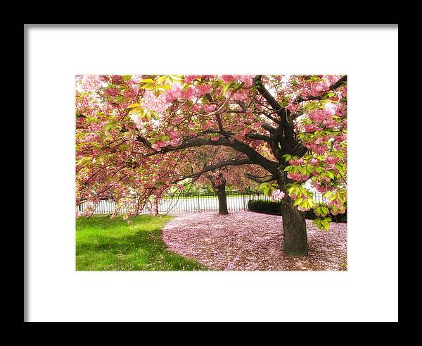 Spring Framed Print featuring the photograph The Cherry Tree by Jessica Jenney