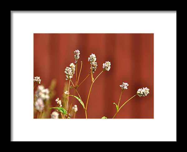 Farm Framed Print featuring the photograph The Color Of Love by JAMART Photography
