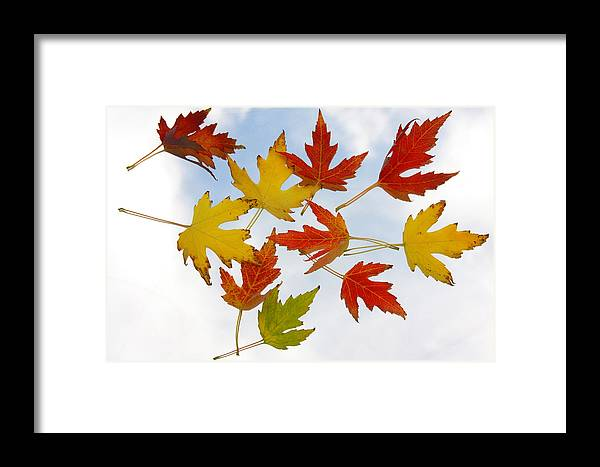 Framed Print featuring the photograph The Colors Of Fall by James BO Insogna