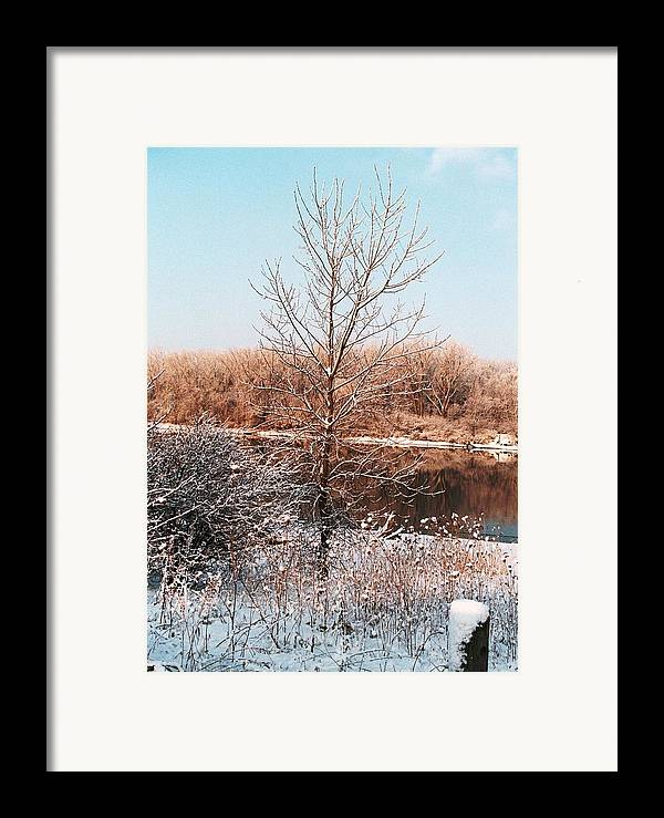 Tree Framed Print featuring the photograph The Colors Of Winter by Jennifer Englehardt