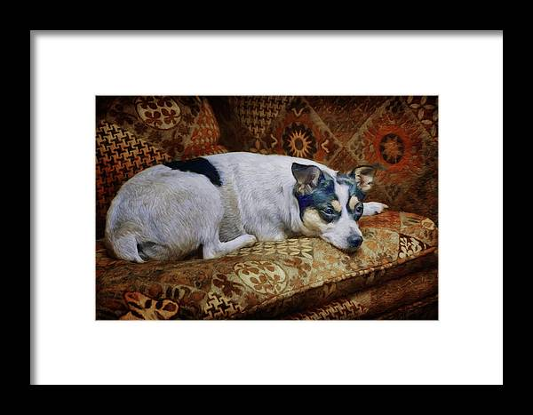 Dog Framed Print featuring the photograph The Comforts Of Home by Nikolyn McDonald