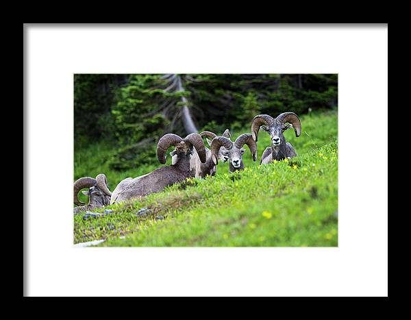 Animals Framed Print featuring the photograph The Congregation by Craig Tata