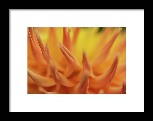 Flower Framed Print featuring the photograph The Dance Of Nature by Ken Stanback