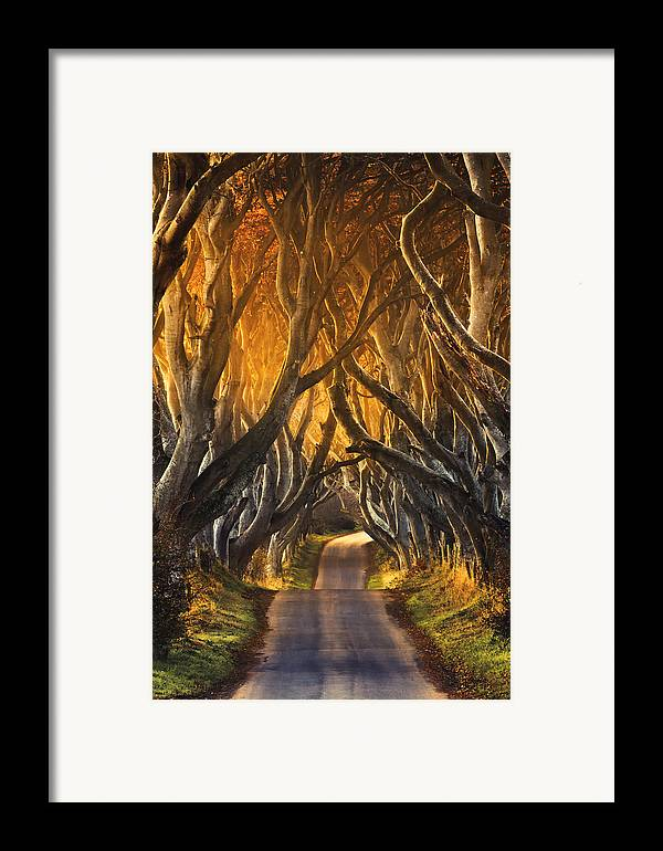 Take A View Framed Print featuring the photograph The Dark Hedges IIi by Pawel Klarecki