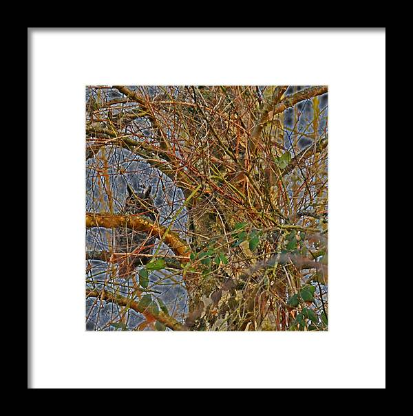 Photography Framed Print featuring the photograph The Darkside Of The Owl by Joel Brady-Power