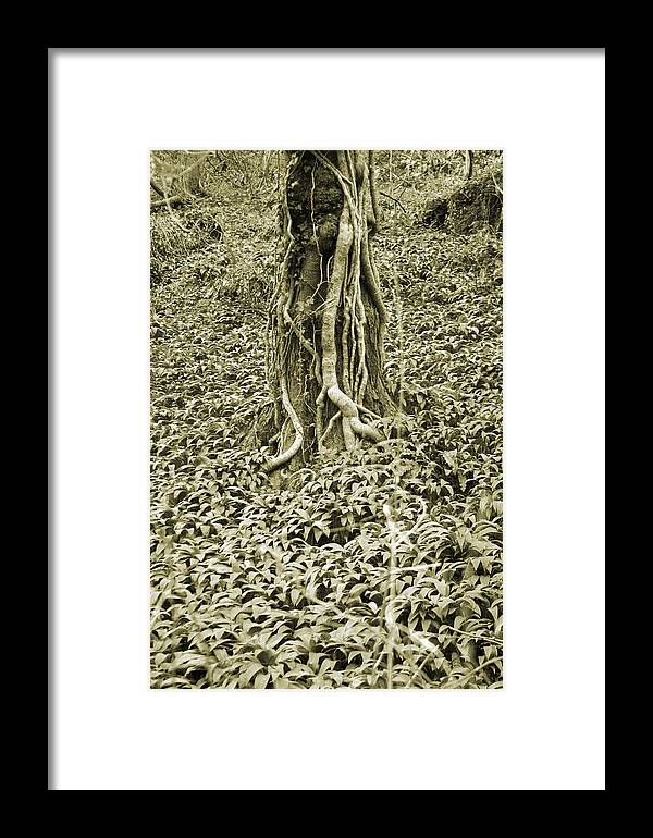 Jez C Self Framed Print featuring the photograph The Deep Dark Woods by Jez C Self