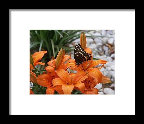 Easter Lilly Framed Print featuring the painting The Descent by Debbie May