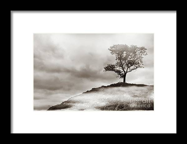 Tree Framed Print featuring the photograph The Edge of Never by Dana DiPasquale