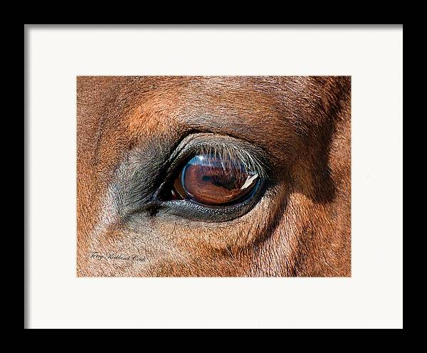 Equine Framed Print featuring the photograph The Equine Eye by Terry Kirkland Cook