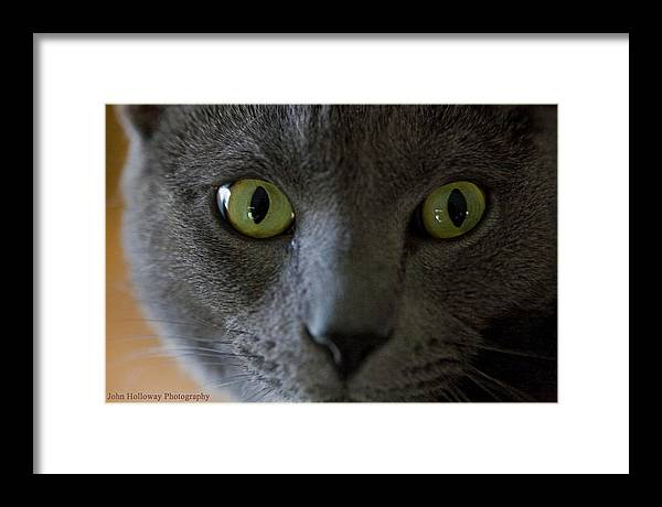Eyes Framed Print featuring the photograph The Eyes Have It by John Holloway