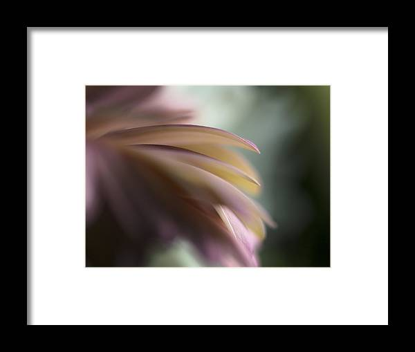 2015 Framed Print featuring the photograph The Feathery Kisses In My Dreams by Sandra Parlow