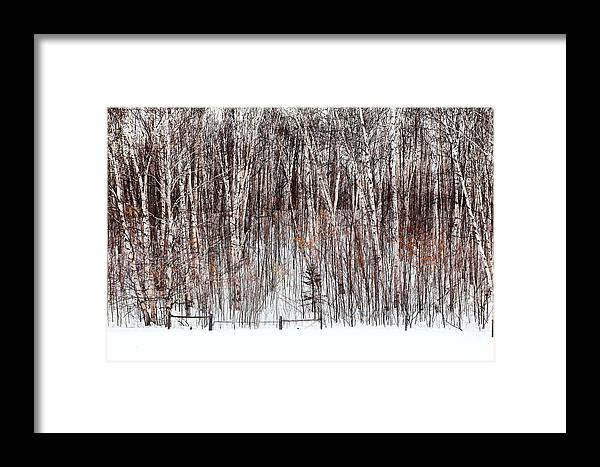 Trees Framed Print featuring the photograph The Fence by Linda McRae