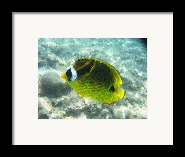 Framed Print featuring the painting The Fish In The Ocean by Jonathan Galente