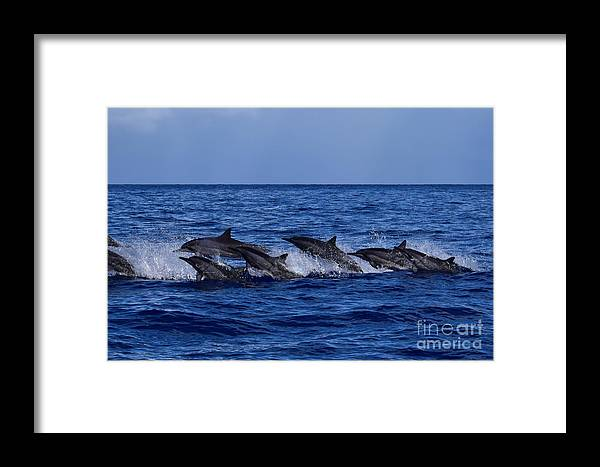 Hawaii Framed Print featuring the photograph The Flight Of The Spinner Dolphin by Jackson Kowalski