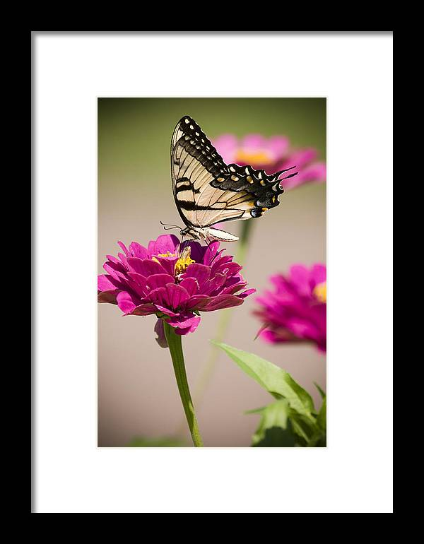 Butterfly Framed Print featuring the photograph The Flower And Butterfly by Chad Davis