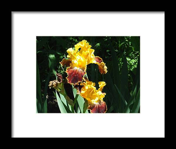 Framed Print featuring the photograph The Flowering Torch by Dennis Wilkins