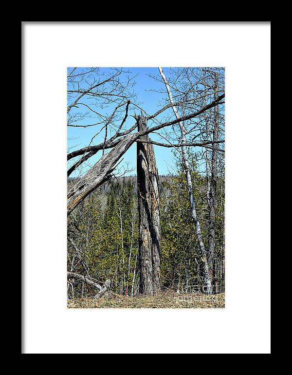 Tree Framed Print featuring the photograph The Gateway by William Tasker