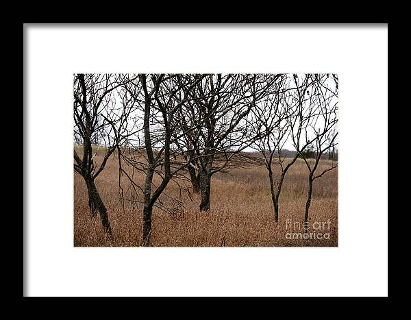 Tree Framed Print featuring the photograph The Gathering by Linda Shafer