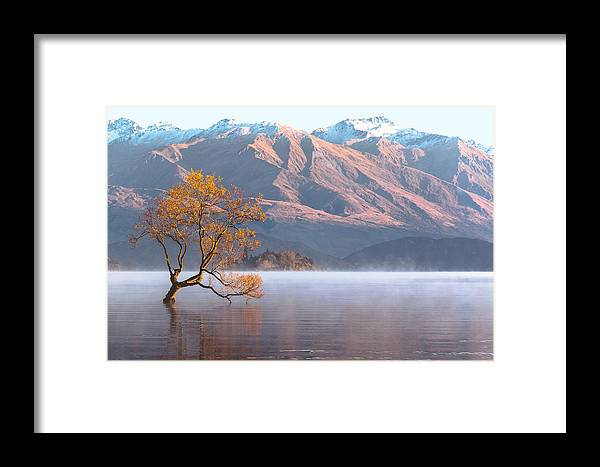 Landscape Framed Print featuring the photograph The Golden Tree by Robert Green