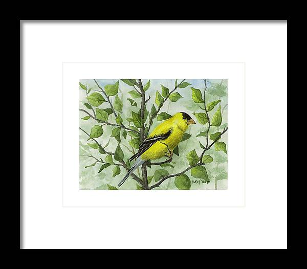 Birds Framed Print featuring the painting The Goldfinch by Mary Tuomi