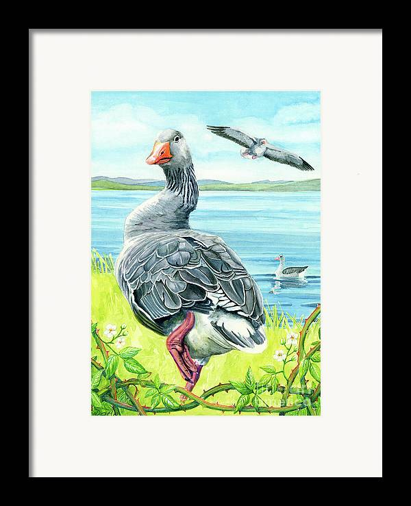 Celts Framed Print featuring the painting The Goose by Antony Galbraith